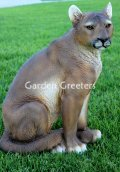 picture of MOUNTAIN LION/COUGAR/CATAMOUNT